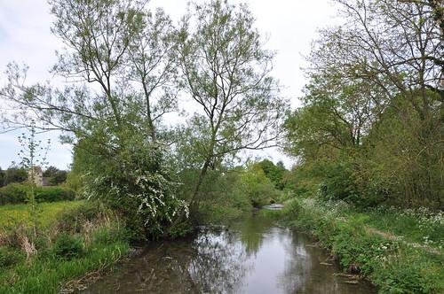 "Eastleach River Leach DSC_0279 • <a style=""font-size:0.8em;"" href=""http://www.flickr.com/photos/47455774@N04/5687084606/"" target=""_blank"">View on Flickr</a>"