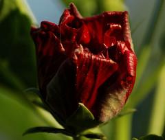 Quinta Flower in the sun!