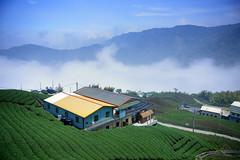 -  - Ba-Gua (Eight Trigrams) Tea Plantation - Ju-Shan Township - Nan-To County (prince470701) Tags: clouds taiwan     nantocounty sonya850 sony2470za baguaeighttrigramsteaplantation jushantownship
