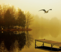 I just want to fly (xandram) Tags: lake photoshop reflections gull pines bestcapturesaoi magicunicornverybest sbfmasterpiece elitegalleryaoi sbfgrandmaster
