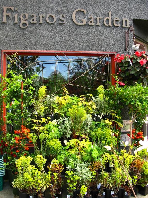 figaro's garden spring green plants