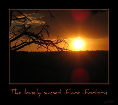 forlorn sunset (janetfo747) Tags: sunset orange cloud sun black tree canon framed awesome grand az spot canyon powershot sihouette sunspot brilliant bold forlorn wow1 wow2 wow3 wow4 arizonia grandcanyonnorthrim sd870 doublyniceshot tripleniceshot mygearandme mygearandmepremium mygearandmebronze mygearandmesilver mygearandmegold mygearandmeplatinum mygearandmediamond artistoftheyearlevel3 artistoftheyearlevel4 lonelyflare flickrstruereflection1 flickrstruereflection2 flickrstruereflection3 flickrstruereflection4 flickrstruereflection5 flickrstruereflection6 flickrstruereflection7 artistoftheyearlevel5 flickrstruereflectionexcellence artistoftheyearlevel6