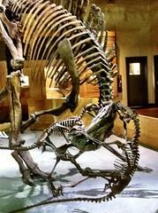 20110521 dinosaur camp - 12
