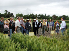 Breeders visit CIMMYT's fields for  2006 International Plant Breeding Symposium (CIMMYT) Tags: people plant planta field mxico mexico experimental gente wheat group talk meeting headquarters visit line listening staff breeding campo grupo conference fieldday director visitor congreso plot sede visita speaking conferencia scientist charla participant trigo reunin researcher researchcenter empleado escuchando breeder parcela lnea researchstation visitante hablando cientfico elbatn experimentstation dadecampo participante cimmyt investigador pltica mejoramiento mejorador centrodeinvestigaciones estacinexperimental estacindeinvestigacin hansbraun hansjoachimbraun internationalplantbreedingsymposium
