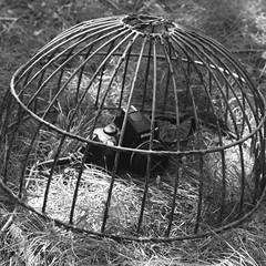 cage for the digital (still~positive) Tags: film 35mm diy nikon 28mm cage scan mount manual fe reverse nikonfe