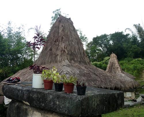 Sumba ouest-Waikabukak-Praiijing-village (39)
