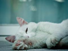 Quando torno a casa amo trovare cose morbide. (Elibellula e il colore del grano) Tags: casa mimmo terrazza morbido ritornare catnipaddicts
