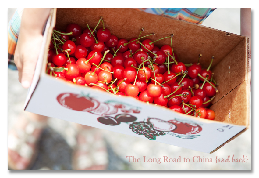 Bing Cherries BLOG