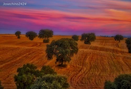 Mirando hacia los campos de Castilla
