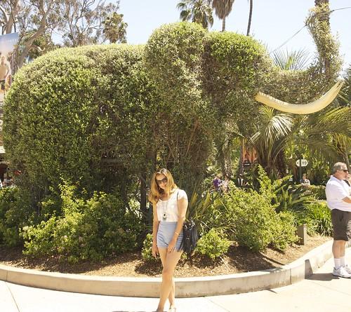 me w elephant bush