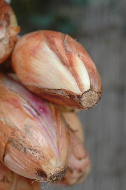 Ventotene, i frutti della terra