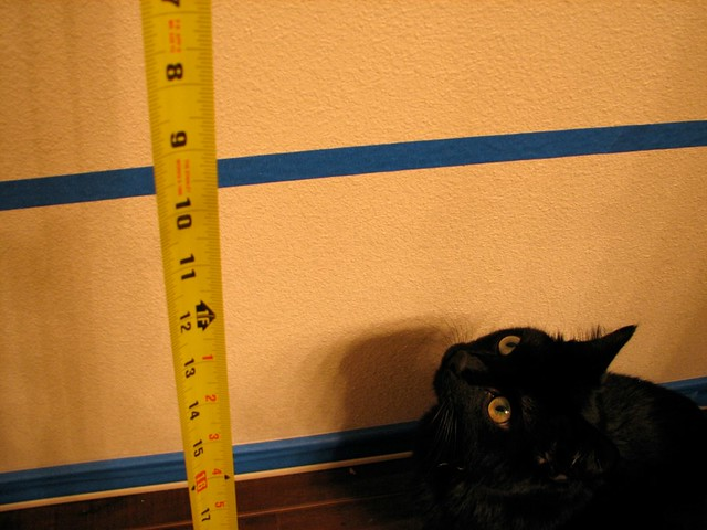 A cat who measures