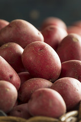 Raw Organic Red Potatoes (brent.hofacker) Tags: agriculture autumn bulb carbohydrate diet farm food fresh freshness groceries group harvest health healthy heap ingredient lifestyle market natural nature nobody nutrition nutritious organic pile potato potatoes potatos produce raw rawpotatoes red redpotato redpotatoes ripe root russet small stack starch starchy tuber tubers uncooked vegetable vegetarian