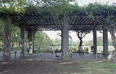 Under the shade (odeleapple) Tags: voigtlander bessa r2m nokton classic 35mm fujicolor100 film shade wisteria