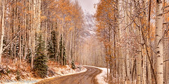 A Winding Colorado Back Road (OJeffrey Photography) Tags: colorado co snow dirtroad aspen aspentrees fallcolor fallcolors coloradospruce sprucetrees ojeffrey ojeffreyphotography jeffowens nikon d800 panorama pano