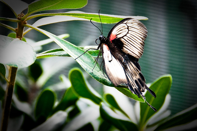 Butterfly exhibit 177