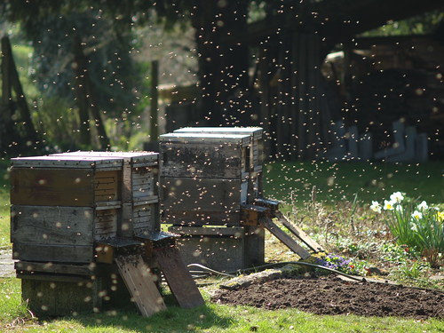 Beehives and bees by Carsten aus Bonn, on Flickr