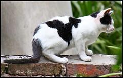 Pequeño felino al acecho (Carlos Casa) Tags: ladrillo cat canon pared rebel is gato felino efs xsi 456 medianera borde f456 acecho 450d 55250 55250mm