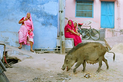 India #76: colours of India (again) (zane&inzane) Tags: travel people woman india house color colour film pig nikon women colorful indian voigtlander documentary pancake 40mm hindu fm3a hindi rajasthan bundi 40f2 slii