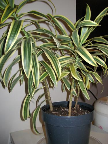 apr02plant