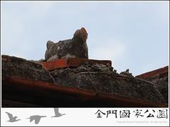 烈嶼屋脊白雞-02.jpg