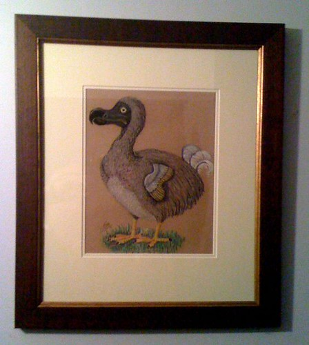 Dodo sketch by Ian McLean, 1981