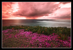 Wildflowers at La Jolla Cove (Explored - Frontpage) (canon60dslr) Tags: ocean california longexposure pink flowers sunset sky orange storm green sandiego cloudy stormy lajolla wildflowers bushes shrubs lajollacove pinkflowers
