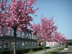 Frühling im Quartier