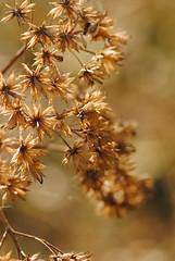 Back lit (Franzo Marruffo) Tags: flowers nature morninglight makro singular doublyniceshot tripleniceshot 4timesasnice 6timesasnice 5timesasnice 7timesasnice