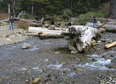 stream crossing cousins (carolyn_in_oregon) Tags: oregon coast al allie pacificocean alexandra oswaldweststatepark shortsandsbeach shortsandscreek
