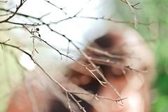 Momentos vivos. (Franco Rostan | Fotografa) Tags: new wedding light summer sky woman color macro tree verde green art textura love luz nature argentina colors girl lady hair arbol photography luces photo nikon day foto chica tour photos bokeh earth top live paisaje dia colores explore cielo desenfoque indie contraste perspectiva 365 da nueva mundo placer fotgrafo seorita franco pelo day100 day101 day102 joven fotografa cmara ramas d60 encuadre 2011 enfoque nitidez explored nikond60 muje nitido rostan ds102 francorostan