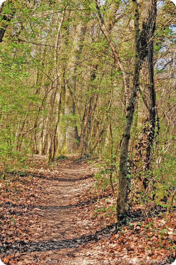 Springtime Forrest Ecole 2.1 bis