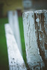 Garden Fence (Chaos&BlissPhotography) Tags: garden dof momshouse storypeople hff fencefriday ayearoflivingpositively