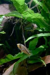 Aquarium 04_2011-2