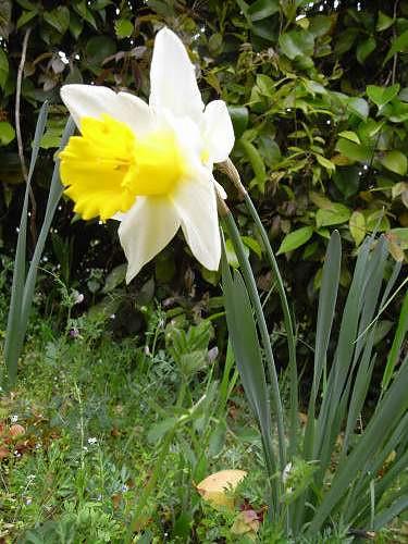 春の花々@明日香村-25