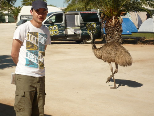 Emu at the caravan park in Monkey Mia, WA