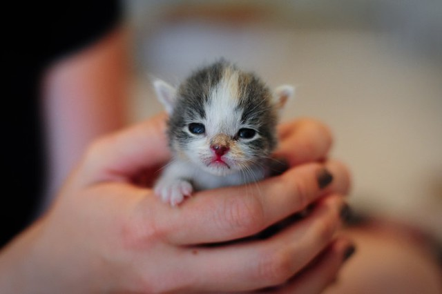 cute rescue kitten tiny palm sized baby