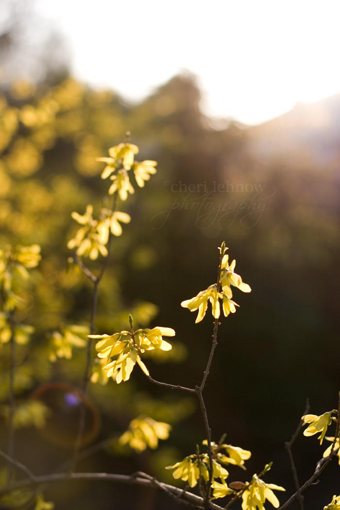 IMG_5857_hyacinth.jpg