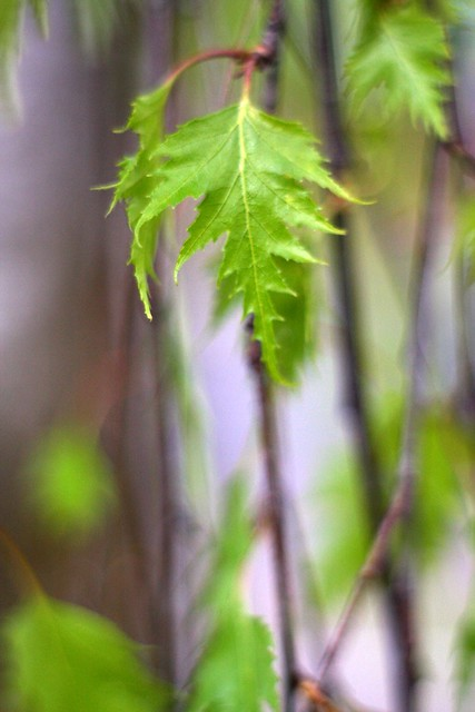 spring leaves (green)