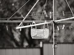 Washing Line Portrait (sallydexter - australian photographer) Tags: york blackandwhite basket australia line clothes pegs washing westernaustralia australiana aspherical 85mmf14 availableforpurchase samyang sallydexter copyrightsallydexterallrightsreserved