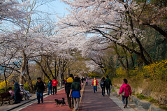 Namsan park on a shiny spring afternoon
