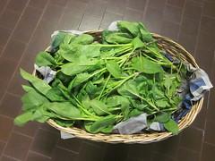 Raccolta degli spinaci 6
