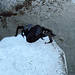 Spidey hiking along the Fox Glacier, South Island, New Zealand 25APR11