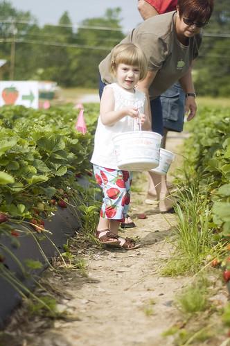 strawberry pickin'_0010