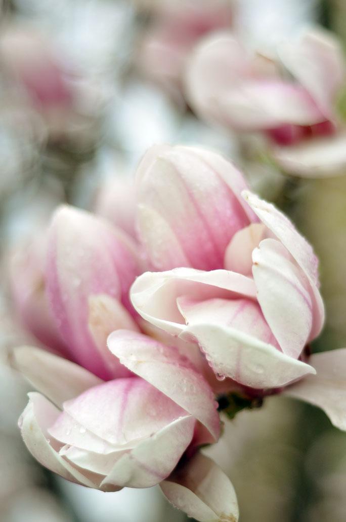 bloom 8