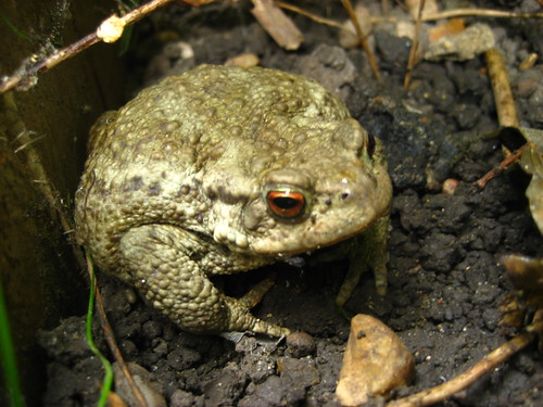 My friend, Mr Toad