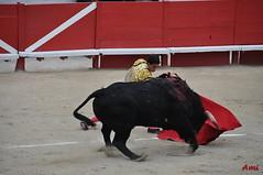 Paques_2011_Corrida_Alternative_Tomasito_DSC_8063 (amcadweb) Tags: france easter feria arles corrida toro manzanares paques tomasito 2011 eljuli garcigrande