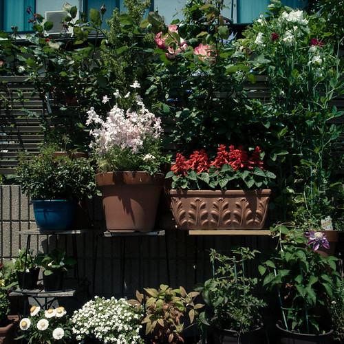 Frontside Garden in the Sun