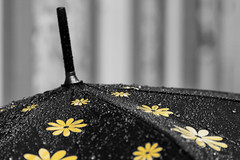 Flowered umbrella (le cabri) Tags: flowers bw black wet water rain yellow closeup umbrella droplets drops atmosphere rainy delicate