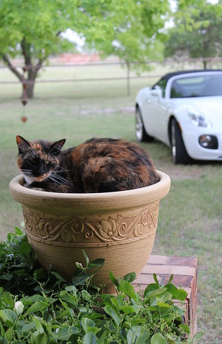 New rare plant ~ Catcus